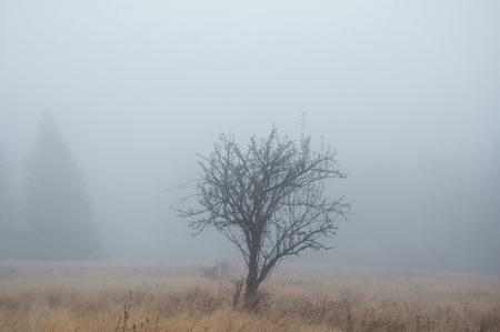 Autumn Tree in the Fog.
