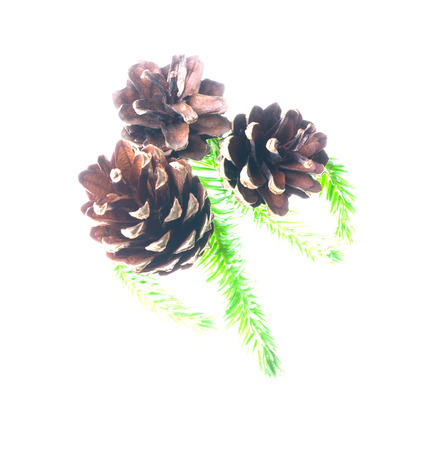 pine three: three pine cone isolated on a white background. Stock Photo