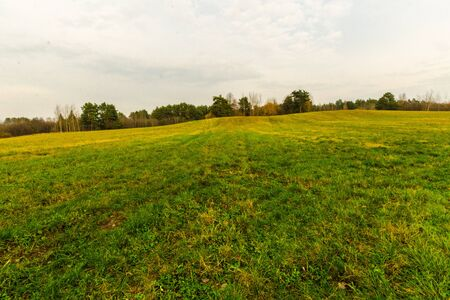 field with green grass and forest in the distance. autumn landscape Stock Photo