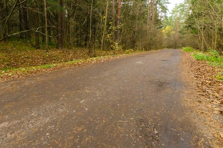 country road in the autumn forest. forest road going into the distance