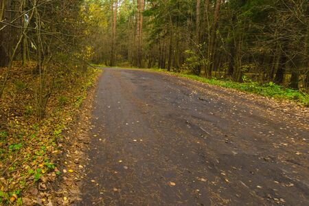 Forest road.road in the autumn forest.yellow leaves on the road and green grass along the road Stock Photo