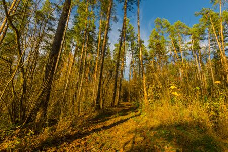 path in the autumn forest. path leading to the forest. nature of Belarus