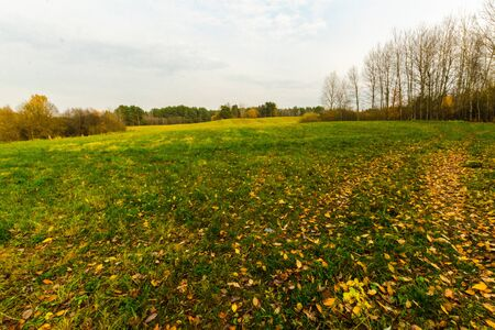 Green and yellow grassy meadow with yellow flowers and trees in the background in autumn