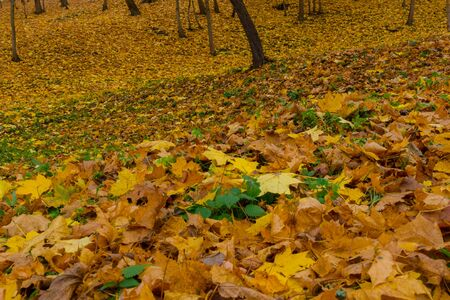 Close up low angle view of a pile of yellow and rusty leaves covering the ground in a park on a dull autumn day. autumn landscape