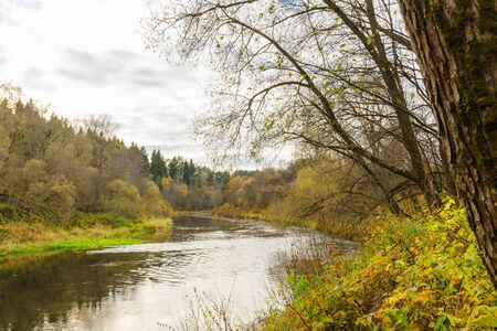 river in the autumn forest. landscape with forest river in autumn day. nature of Belarus 写真素材