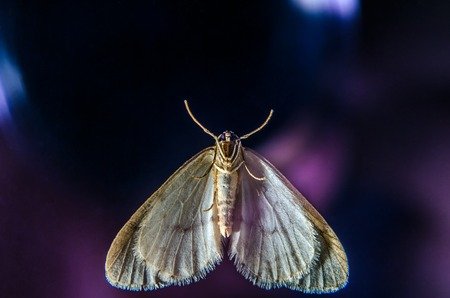 Night Butterfly on the window. Winter Moth. Close up. Stock fotó