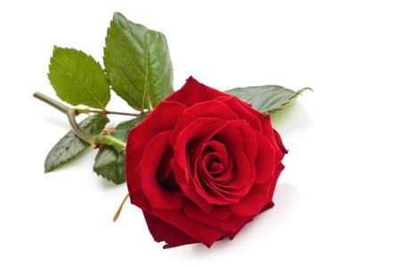 赤いバラは、白い背景で隔離されました。