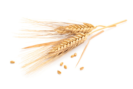 Ears of wheat and seeds isolated on white background. photo