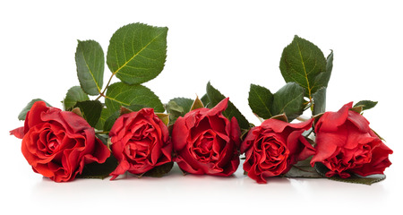 Frame of red roses. Isolated on white background.