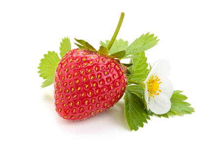 Fresh strawberry with leaf and flower. Isolated on white background. photo