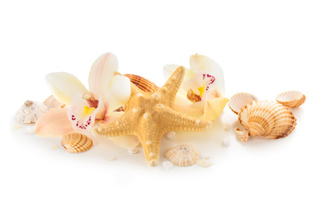 isolated of white: Shells pebbles and orchids. Isolated on white.