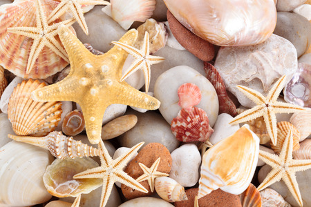 seaa: Background of pebbles different shells and starfishes.