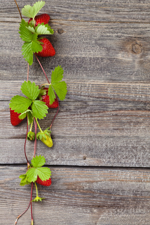 Border of fresh strawberries with growing runners and flowers. On old wooden table. Standard-Bild