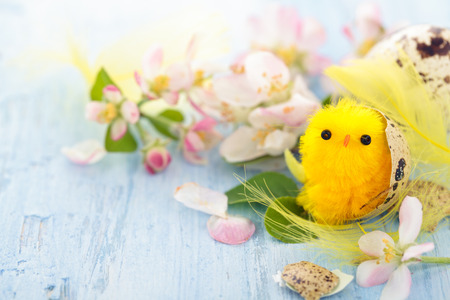 Small chicks in nest on blue wooden background.