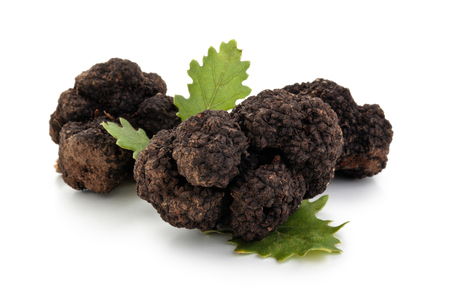 Closeup shot of black truffles and oak leaves isolated on white background.