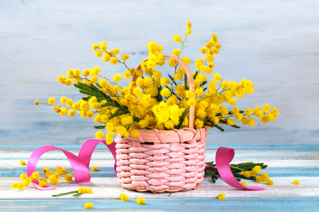 Branch of mimosa in basket on blue rustic background.