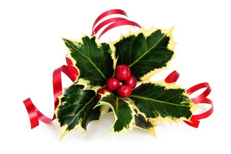Sprig of holly with berries and ribbon isolated on a white background.