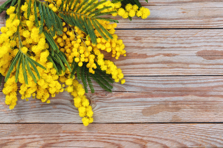Close up shot of mimosa flowers on wooden rustic Banque d'images