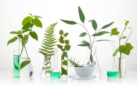 Cosmetic laboratory experiment and research with leaf, oil and ingredient. Extract for natural beauty and organic skincare product package,bio science concept. Alternative medicine.