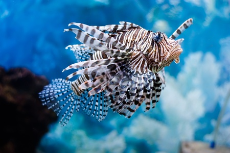 unusual beautiful fish Stock Photo - 12800873