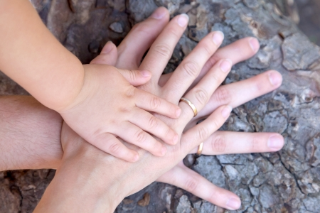 unanimous: Three hands of the family on the tree bark - a baby, mother and father