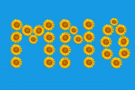 Floral alphabet made from flowers of sunflower photo