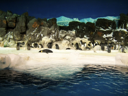 Group of penguins together on the island  Stock Photo - 17445943