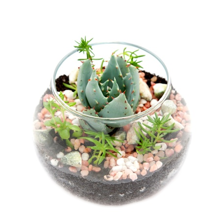 potted plant cactus: Florarium  Group of house plants in a round glass pot  Stock Photo