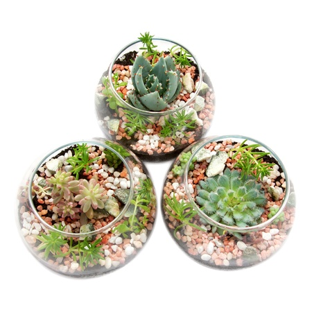 botanica: Three clear glass pots with plants  Florarium  Group of house plants in a round glass pot