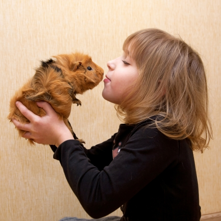 guinea: The little girl kissing the guinea pig. Love for animals concept.