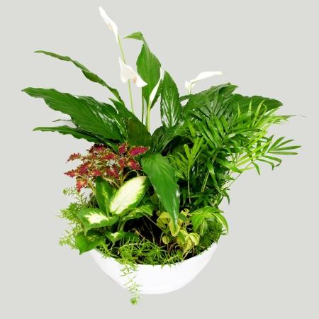 houseplants: Group houseplants. Isolated on gray background. Stock Photo
