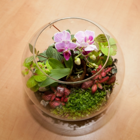 purple orchid: Mini orchid and other house plants in a round glass jars.