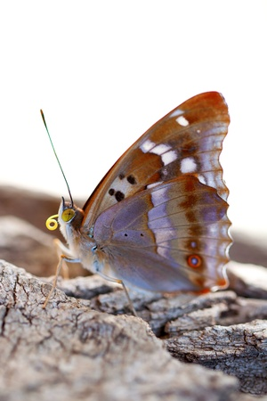 Butterfly sitting on a tree  Macro  Stock Photo - 20408621