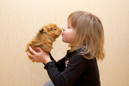 The little child kissing the guinea pig. Love for animals concept.