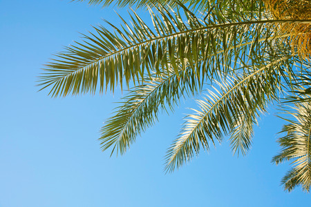 Palm branches against the blue sky. Sunny summer, vacation, holiday background. photo