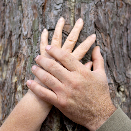 Old people holding hands. Hands of an elderly couple on a tree trunk outdoors. Family and love concept. Closeup. Stock Photo