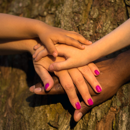 african american handshake: Diversity family concept. Four hands of the mixed race family together on the tree bark