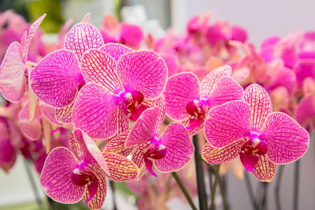 Orchid flowers (Orchidáceae) close-up. Pink Orchid. Stock Photo