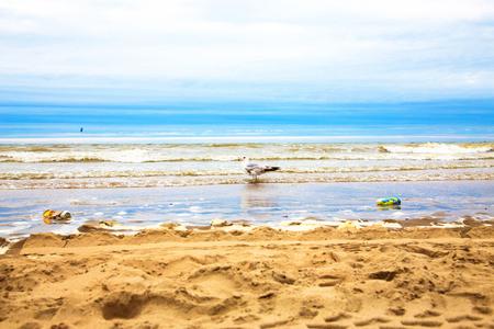Atlantic Ocean, North Sea, beach. Seagull walking among the garbage. Environmental pollution. Stock Photo