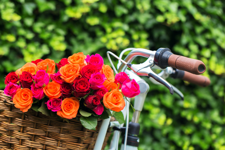 Multicolored roses bouquet in bicycle basket. Close-up. Enjoy life concept. Stock Photo