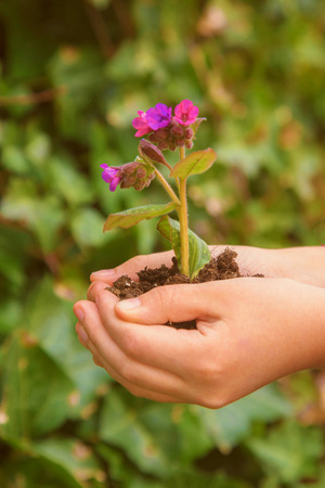 The child is holding a young flower growing in the ground. The child is going to plant this flower. Close-up of baby hands and a growing flower. Green planet Earth, ecology, caring for plants concept. Standard-Bild - 99364529