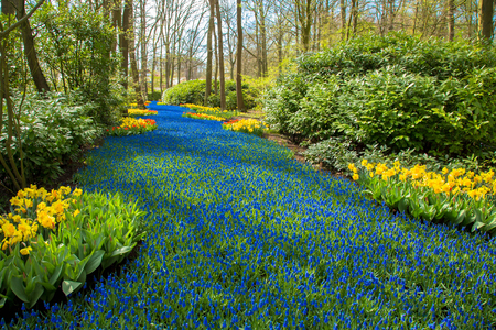 A blue river in the forest, formed from flowers. A lot of blue flowers create the illusion of a stream or a river among the trees. Spring landscape, spring background, sunny spring day. Standard-Bild - 99996191