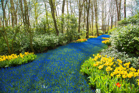 A blue river in the forest, formed from flowers. A lot of blue flowers create the illusion of a stream or a river among the trees. Spring landscape, spring background, sunny spring day. Standard-Bild - 99939373