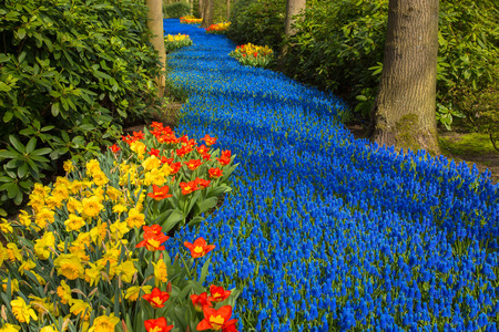 A blue river in the forest, formed from flowers. A lot of blue flowers create the illusion of a stream or a river among the trees. Spring landscape, spring background, sunny spring day. Standard-Bild - 99953275