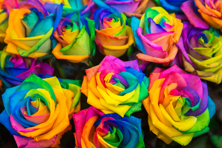 Diversity, joy, LGBT, rainbow, flowers, gender equality background. Colorful variety of roses of all colors of the rainbow as a floral background or texture. Standard-Bild - 100040925