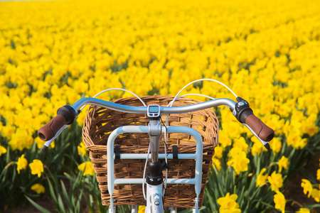 Handle bar bicycle against the background of a blooming flower field. Spring or summer travel concept. Eco-friendly transport, environmental protection, friendship and unity with nature. Standard-Bild - 100370545