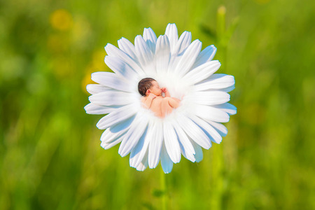 Newborn baby sleeps in white daisy flower. Newborn baby sleeps in a meadow against green grass background. New life, pregnancy, childbirth, newborn concept. Purity, safety and care symbol.
