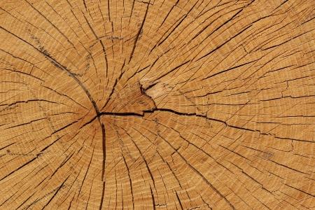 rive: oak wood