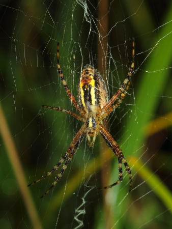 wasp spider covered early morning dew photo