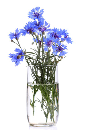 Bouquet of cornflower in a glass photo